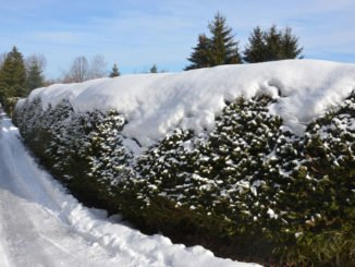 Hecke Schnee