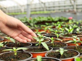Pflanzen vorziehen Gewächshaus