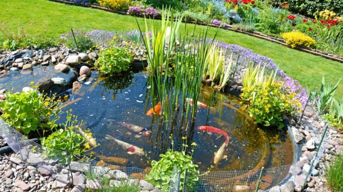 Fische Gartenteich
