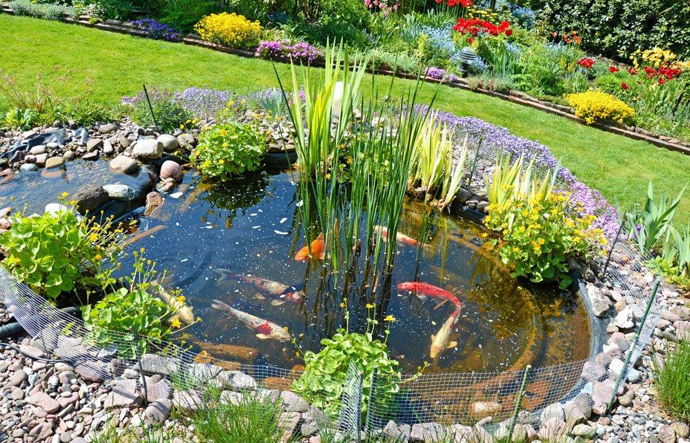 Fische Fur Den Gartenteich Es Muss Nicht Immer Koi Sein