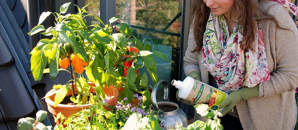 Fabelhaft Tomaten und Paprika direkt vom Balkon #EC_61