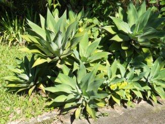 Sonnenbrand bei Pflanzen