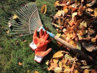 Rasen im Herbst düngen