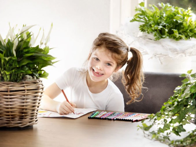 Luftreinignede Pflanzen