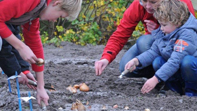 Pflanzem mit Kindern