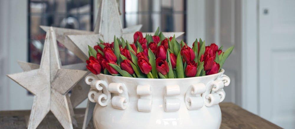 Tulpen zu Weihnachten