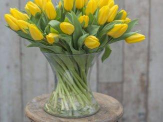Tulpen Tipps
