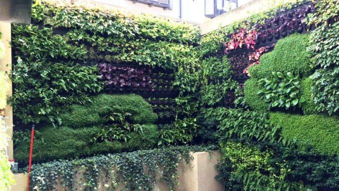 Hinterhof begrünen