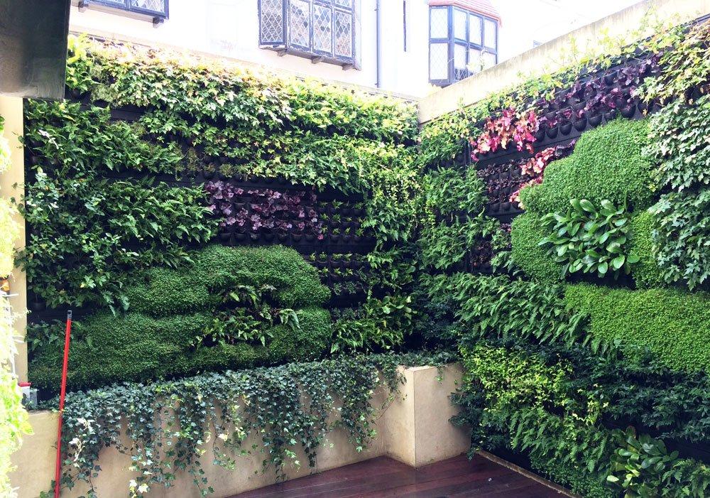 Hauswand Begrünen