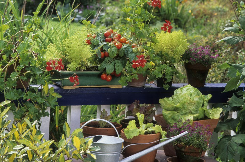 Topfgarten Gemüse