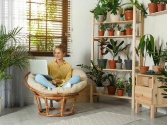 Gesunde Zimmerpflanzen