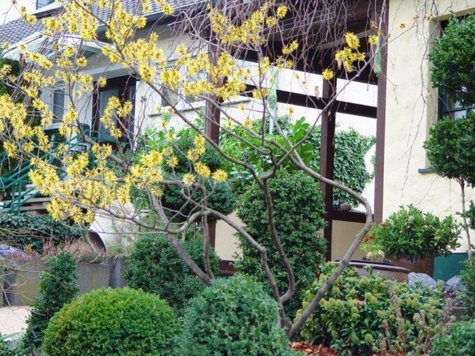 Vorgarten im Winter