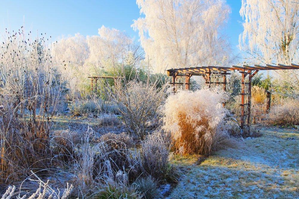 Gräser Garten Winter