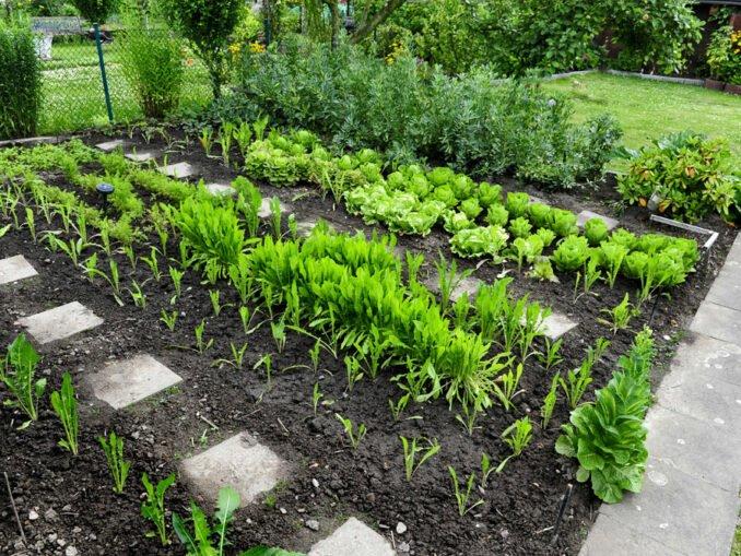 Gemüsebeet im Garten