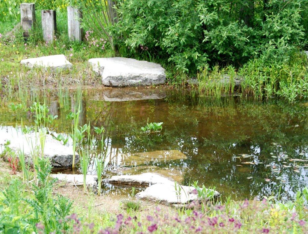 Naturnaher Garten Teich