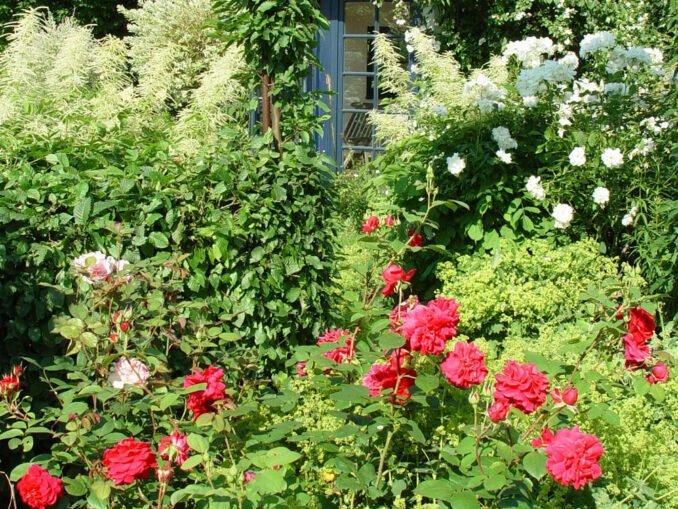 Rosen kombinieren