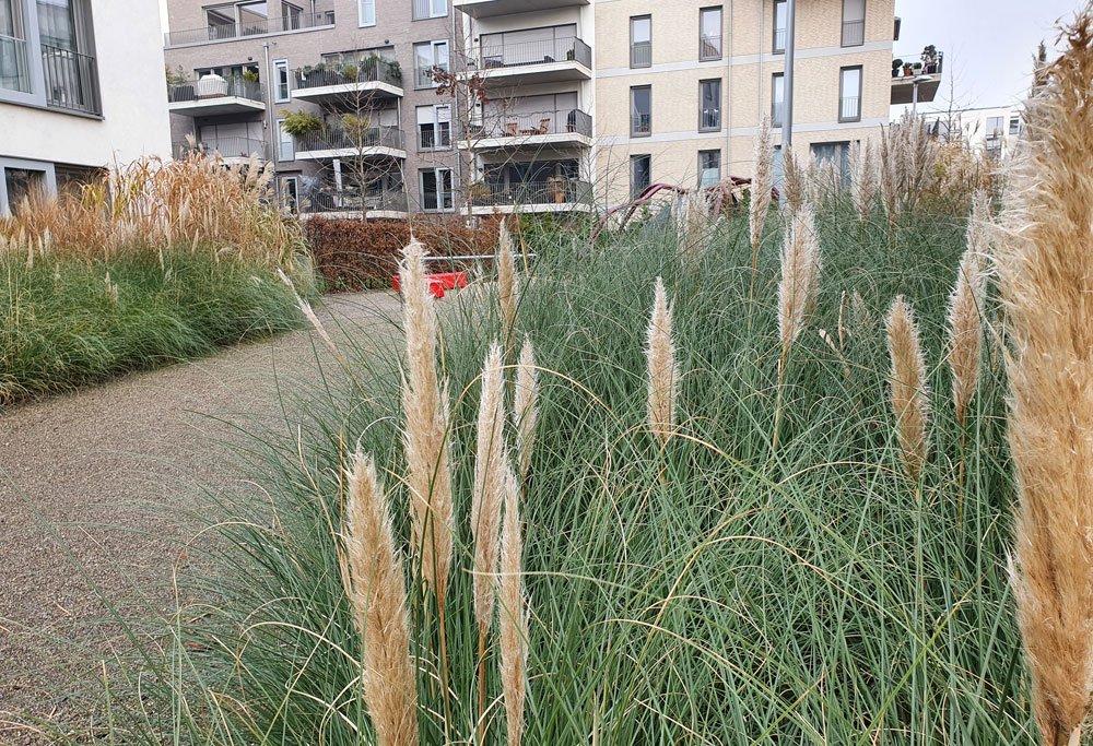 Vorgarten Gräser