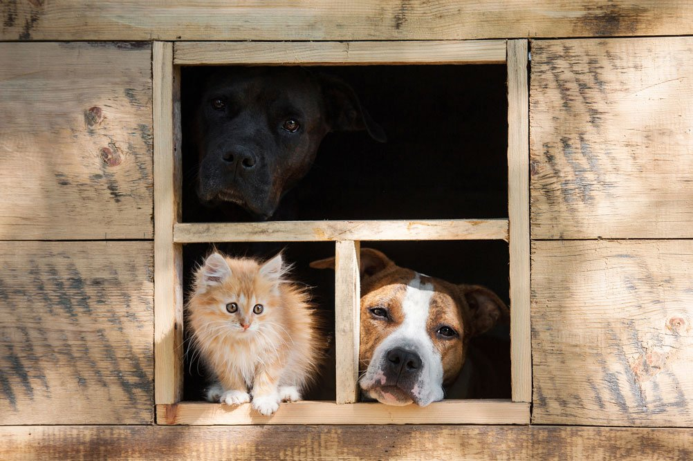 Tiere schauen aus Gartenhausfenster